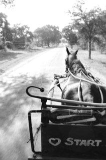 馬車の写真・画像素材[1554721]