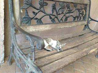 木製のベンチの上に横になっている猫の写真・画像素材[1557053]