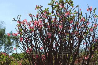 赤い花の写真・画像素材[1561075]