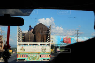 荷台の親子ゾウの写真・画像素材[1566584]