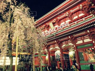 桜ライトアップの写真・画像素材[1567445]