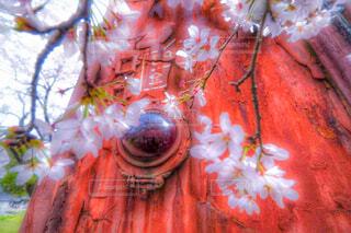 廃車両の桜の写真・画像素材[1550338]