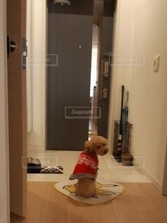 主人の帰りを待つワンちゃんの写真・画像素材[2781424]