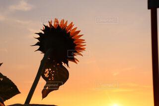 綺麗な夕暮れどきの写真・画像素材[1557953]