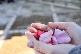 手の中に花びらの写真・画像素材[1646980]