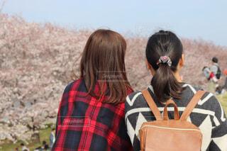 桜を見る女性たちの写真・画像素材[1879001]