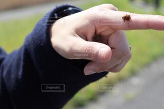 てんとう虫の写真・画像素材[1879009]