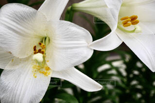 花のクローズアップの写真・画像素材[2186428]