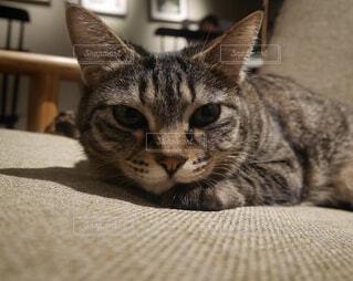 椅子に横たわる猫の写真・画像素材[2211218]
