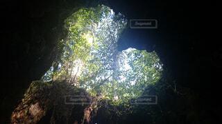 ハートから溢れる木漏れ日の写真・画像素材[1551463]