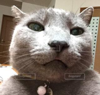 猫のアップの写真・画像素材[1552100]