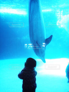 青いイルカの写真・画像素材[1600125]