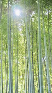 竹林と太陽の写真・画像素材[1725050]