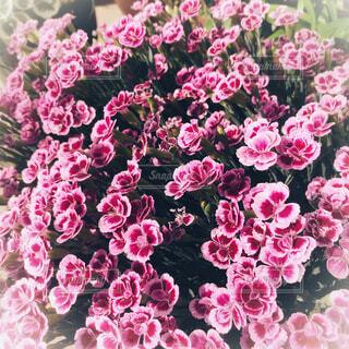 ピンクの花の写真・画像素材[2146965]