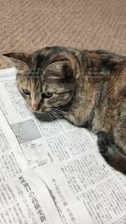 猫の写真・画像素材[1552385]
