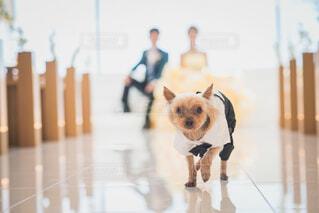 愛犬と一緒に前撮りの写真・画像素材[1570034]