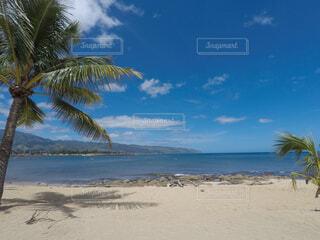 ヤシの木とビーチの写真・画像素材[1554349]