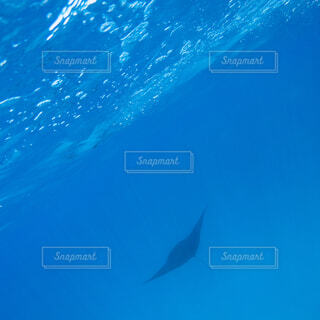 水面下を泳ぐ魚たちの写真・画像素材[1555213]