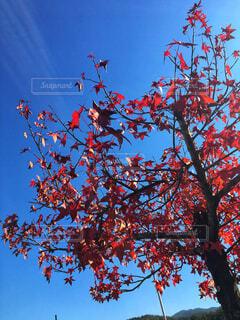秋!の写真・画像素材[1596091]