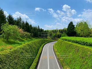 緑に囲まれた道の写真・画像素材[2081394]