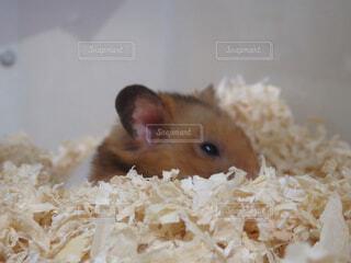 動物の写真・画像素材[1572545]