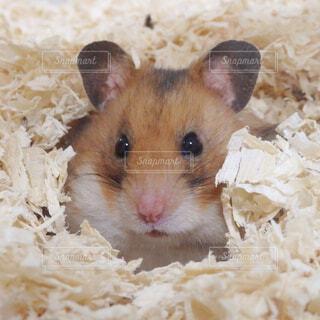動物の写真・画像素材[1572548]