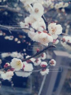 近くの花のアップの写真・画像素材[1555648]