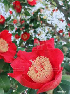 近くの花のアップの写真・画像素材[1556439]