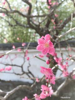 花の写真・画像素材[1570240]