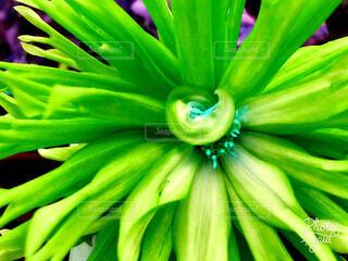 花の写真・画像素材[1573447]