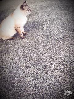 地面に座っている猫の写真・画像素材[1593484]