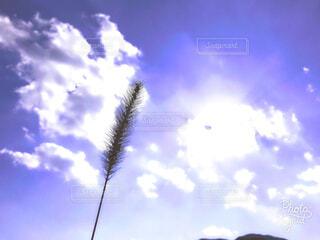 秋空には雲のグループ♡の写真・画像素材[1606415]