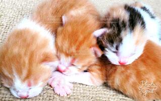 産まれて間も無い子猫ちゃん達♡の写真・画像素材[1610104]
