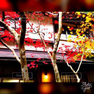 紅葉と建物の写真・画像素材[1610705]