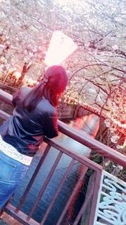 目黒川の桜を見つめる女性の写真・画像素材[2356170]