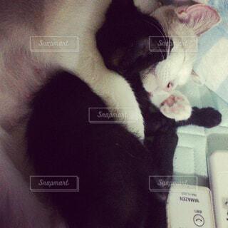 抱きしめる母猫の写真・画像素材[1555305]