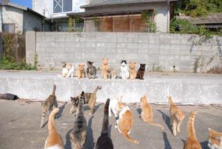 建物の上に座っている猫の写真・画像素材[1555782]