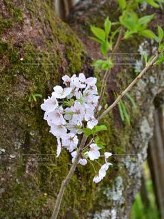 近くの花のアップの写真・画像素材[1557680]