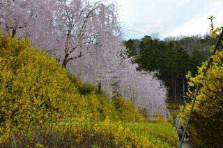 フォレスト内のツリーの写真・画像素材[1557681]