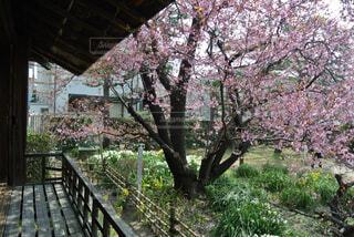 庭のベンチの写真・画像素材[1557710]