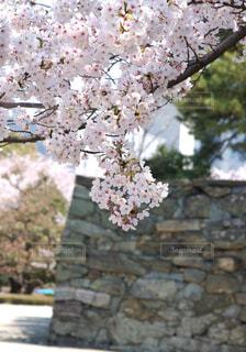 近くの花のアップの写真・画像素材[1557724]