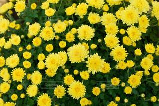 花の写真・画像素材[1569027]