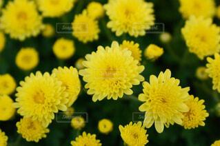 花の写真・画像素材[1569028]