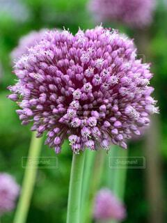 花の写真・画像素材[1569083]
