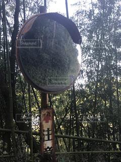 森のビューの写真・画像素材[1557172]