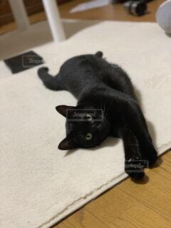 床の上に横たわる黒い猫の写真・画像素材[1556971]