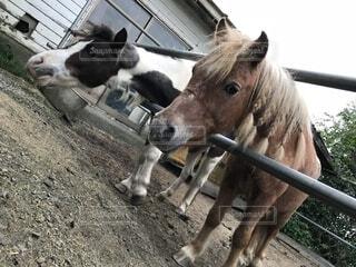フェンスの横にある馬の接写の写真・画像素材[2206347]