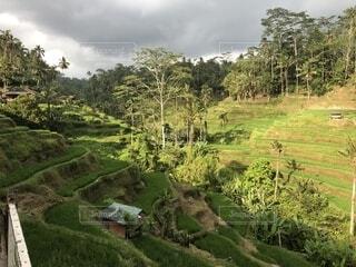 背景の木と大規模なグリーン フィールドの写真・画像素材[1558917]