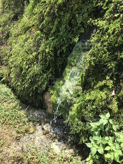 森の中の植物の写真・画像素材[2168574]