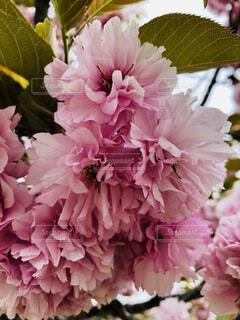花のクローズアップの写真・画像素材[2120473]